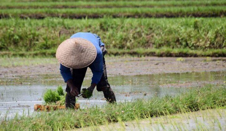 Pertanian Organik