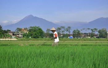 Mengapa Petani Indonesia Miskin
