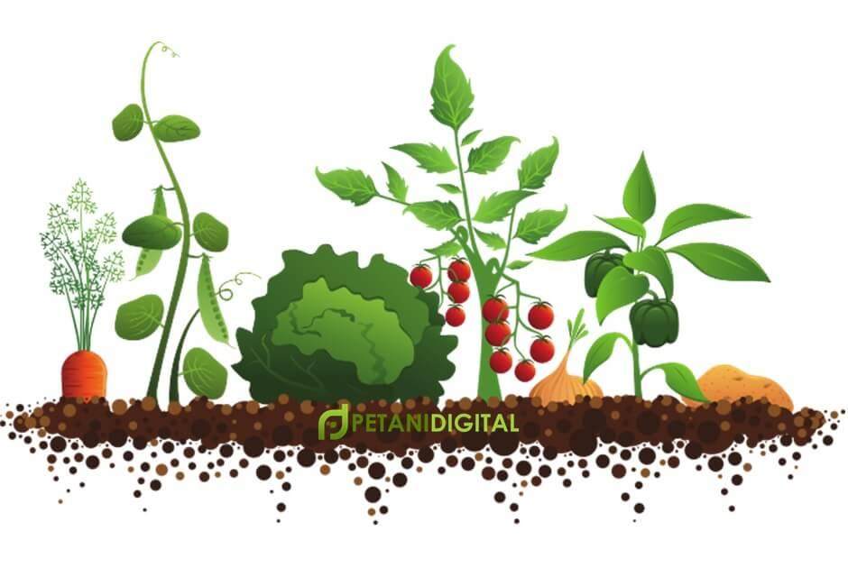 Apa Itu Pertanian Hortikultura Petani Digital