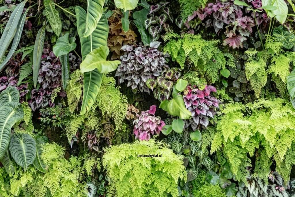 Tanaman Bunga - Florikultura