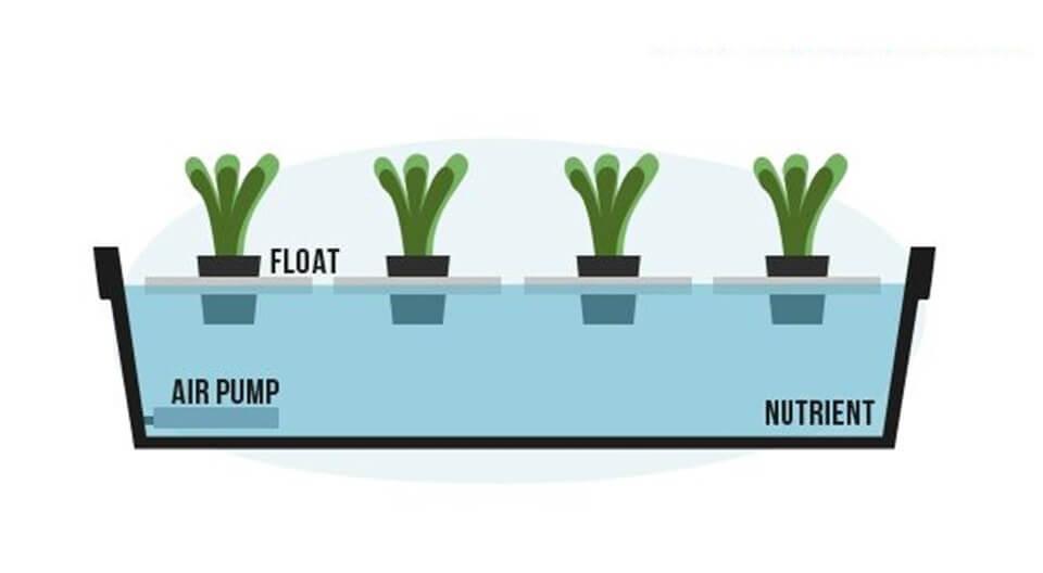 Cara Menanam Hidroponik dengan Sistem Water Culture