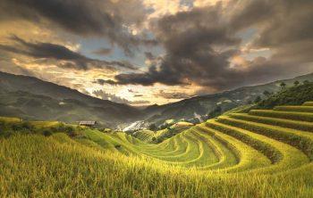 Mengapa Petani di Dataran Tinggi Jarang Menanam Padi