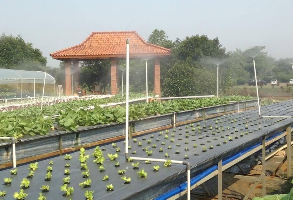 Pandawa Farm