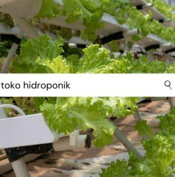 Toko Hidroponik