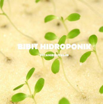 Bibit Hidroponik