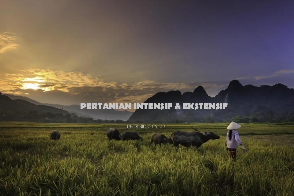 Pertanian Intensif dan Ekstensif