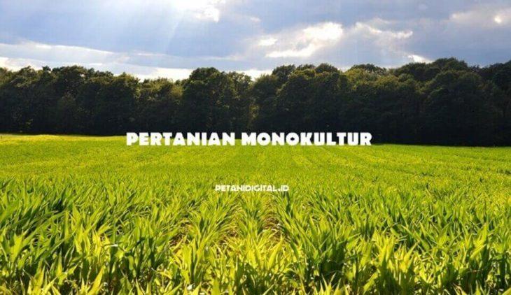Pertanian Monokultur