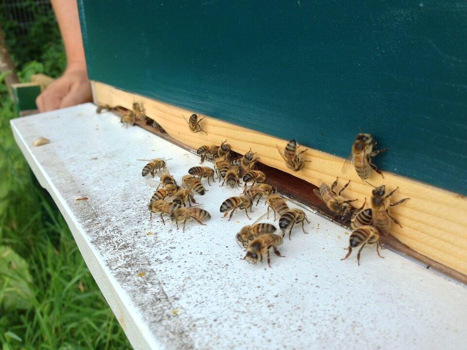 Rumah Lebah - Penjara Lebah