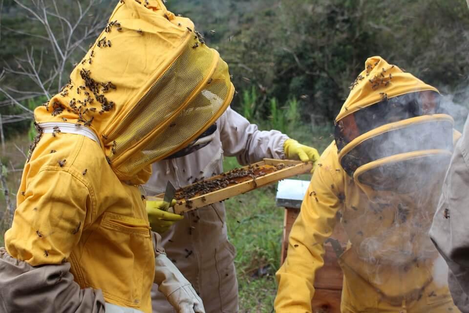 pengasapan di mandala penginapan lebah