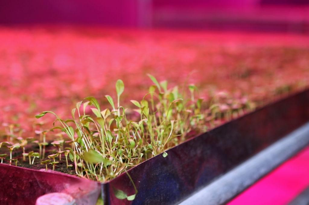 penyemaian bibit tanaman