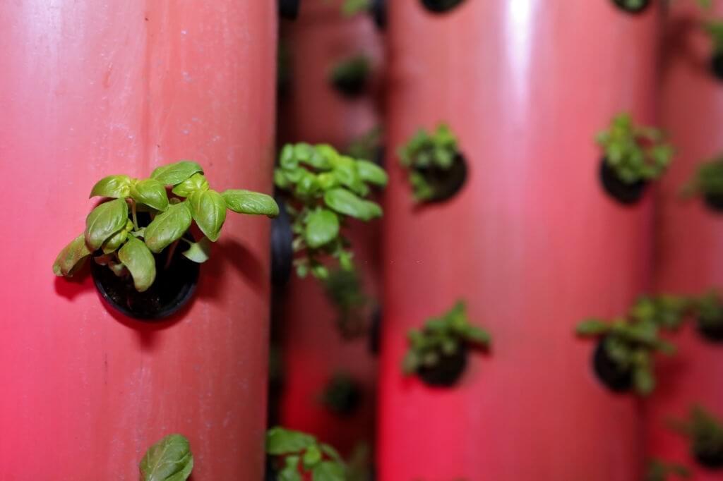 tanaman yang dibudidayakan via aeroponik
