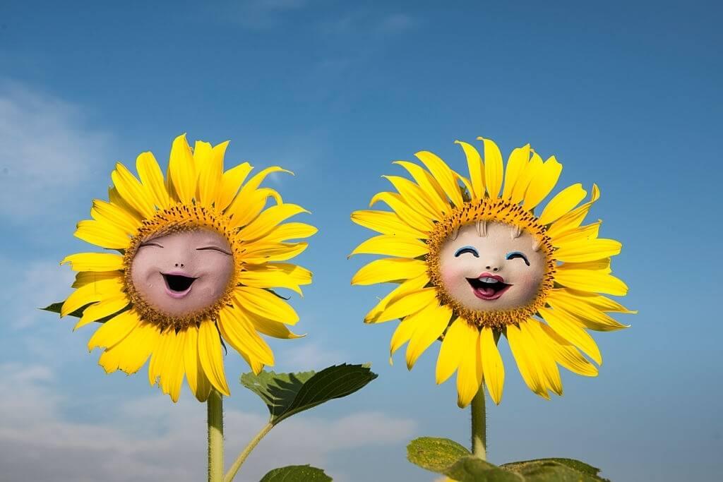 Gambar Animasi Bunga Matahari