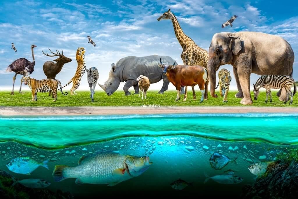 Gambar Fauna - Hewan