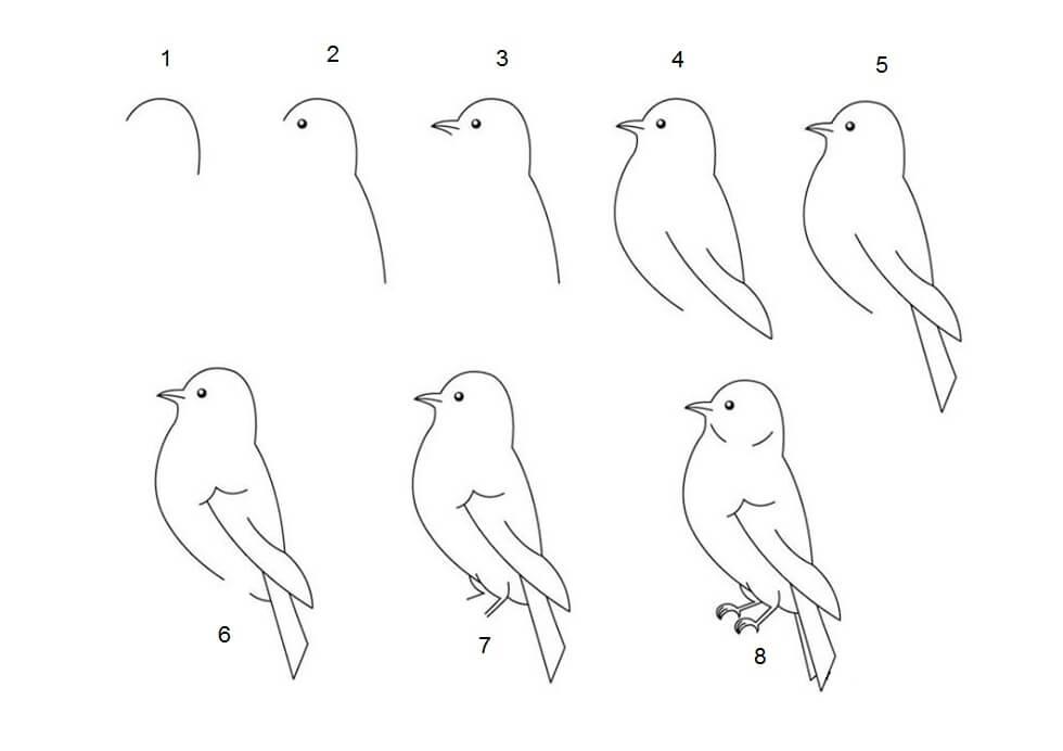 Gambar Fauna - Burung