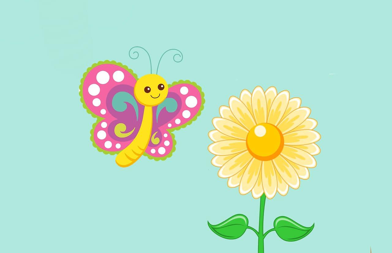 Gambar Flora dan Fauna - Kupu Kupu Bunga Matahari