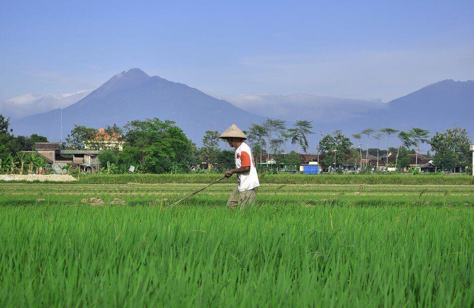 Gambar Petani Di Sawah Dekat Gunung