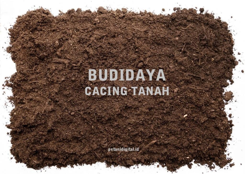 Budidaya Cacing Tanah