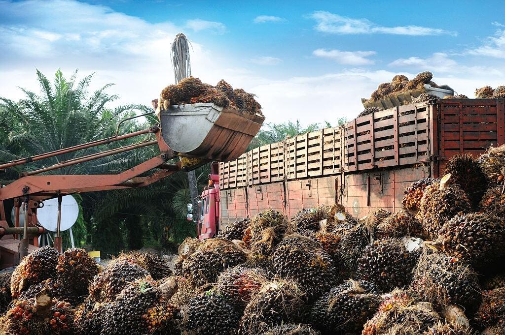 Kelapa Sawit - Komoditas Ekspor Indonesia