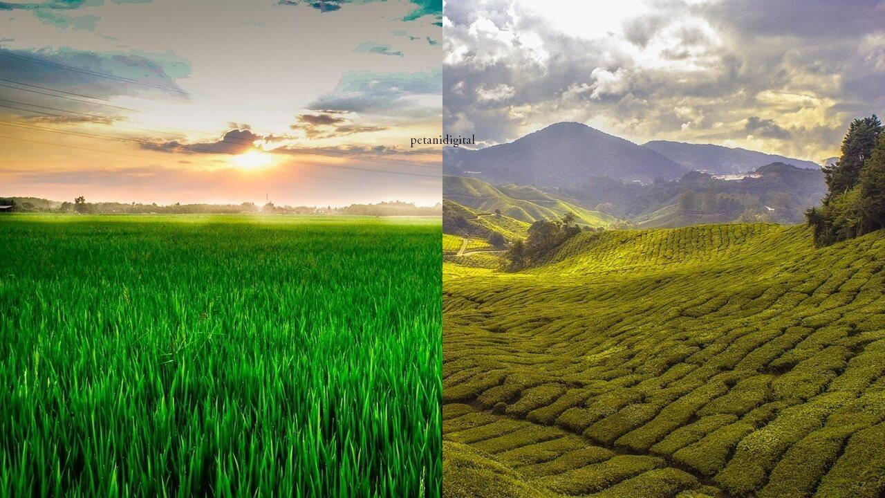 Perbedaan Dataran TInggi dan Dataran Rendah